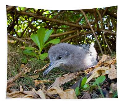 Wedge-tailed Shearwater Puffinus Tapestry