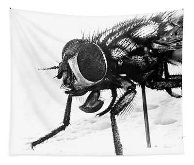 1940s Extreme Close-up Of House Fly Tapestry