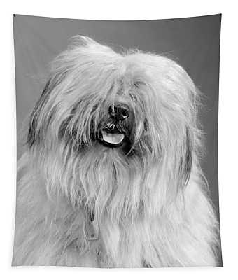 1960s Portrait Of Old English Sheepdog Tapestry
