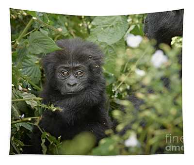Baby Mountain Gorilla Tapestry