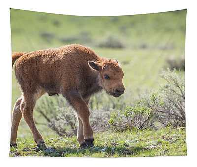 Bison Calf Tapestry