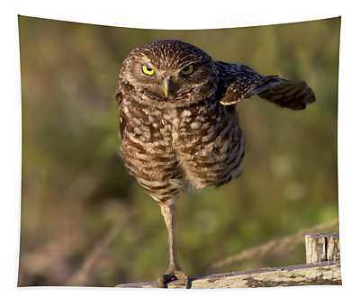 Burrowing Owl Photograph Tapestry