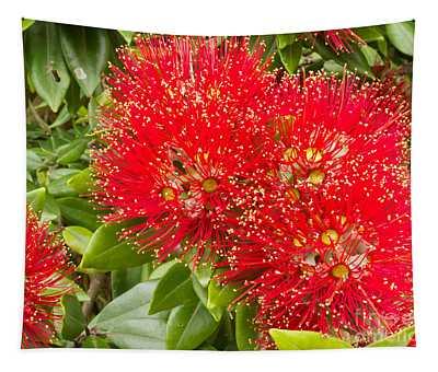 Closeup Blossoms Of Nz Christmas Tree Pohutukawa Tapestry
