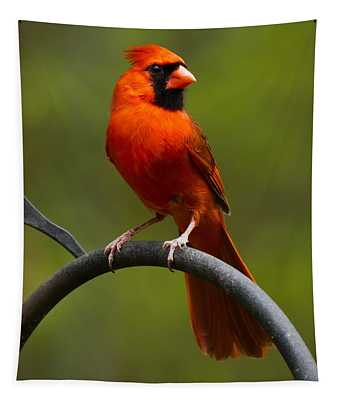 Male Cardinal Tapestry