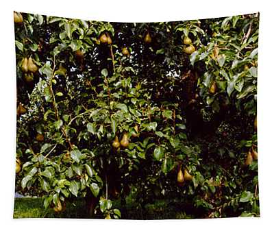 Pear Trees In An Orchard, Hood River Tapestry