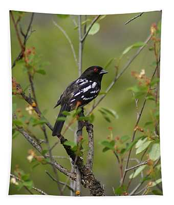 Spotted Towhee Tapestry