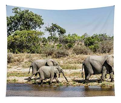 African Elephants Loxodonta Africana Tapestry