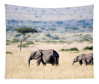 African Elephants Loxodonta Africana Tapestry