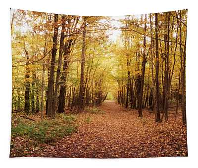 Trail Through The Forest Tapestry