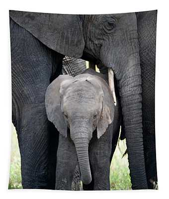 African Elephant Loxodonta Africana Tapestry