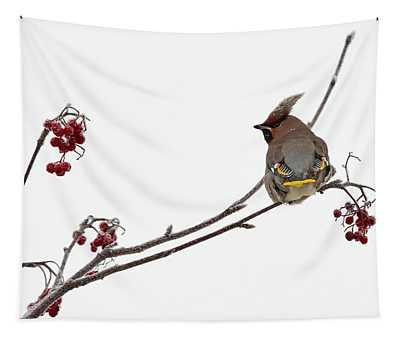 Bohemian Waxwings Eating Rowan Berries Tapestry