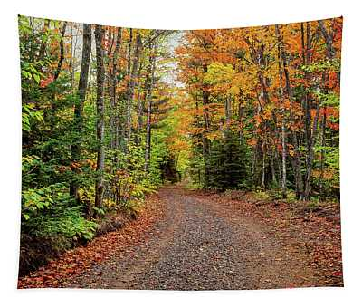 Dirt Road Passing Through A Forest Tapestry