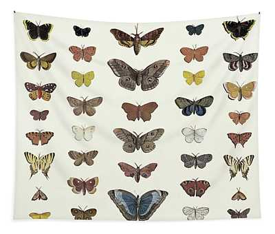 A Collage Of Butterflies And Moths Tapestry