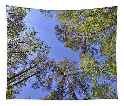 A Forest Sky Tapestry