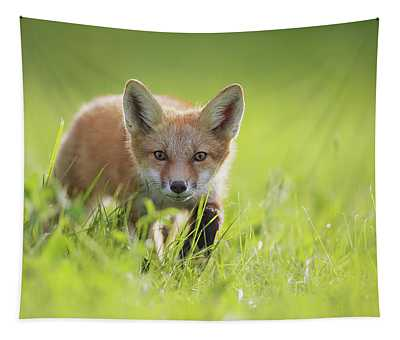 A Fox In The Grass  Montreal, Quebec Tapestry