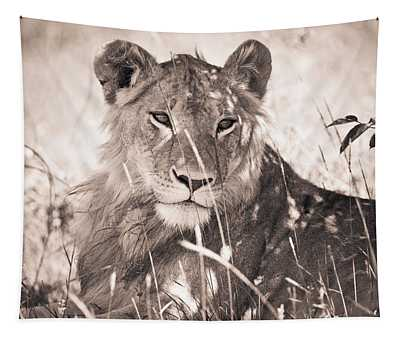 A Lioness Lays In The Shade Kenya Tapestry