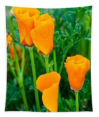 A Pair Of Orange Tapestry