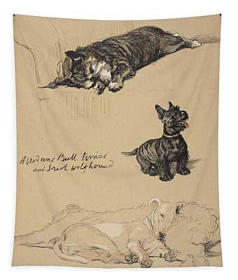 Aberdeens, Bull Terrier And Irish Tapestry