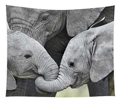 African Elephant Calves Loxodonta Tapestry