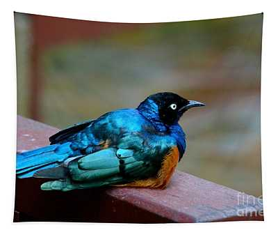 African Superb Starling Bird Rests On Wooden Beam Tapestry