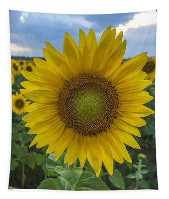 After The Rain Sunflower Augusta Nj Tapestry
