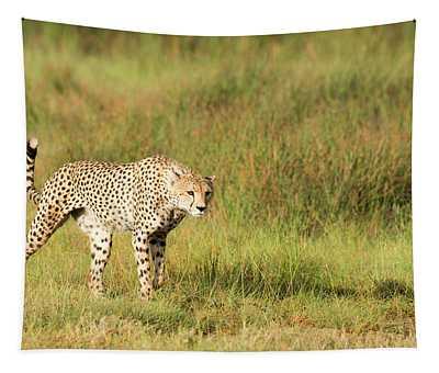 Alert Cheetah  Acinonyx Jubatus Tapestry