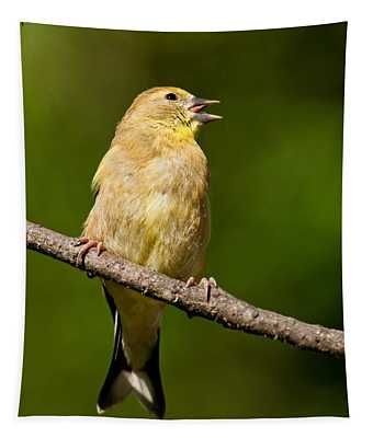 American Goldfinch Singing Tapestry