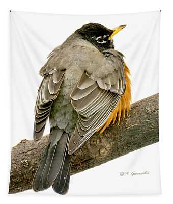 American Robin Male Animal Portrait Tapestry
