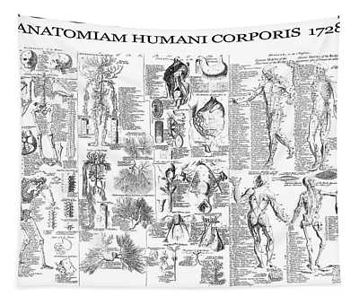 Anatomy Of The Human Body  1728 Tapestry