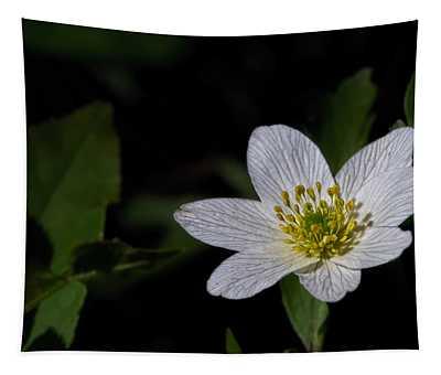 Anemone Nemorosa  By Leif Sohlman Tapestry