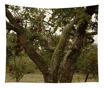 Apple Trees In An Orchard, Sebastopol Tapestry