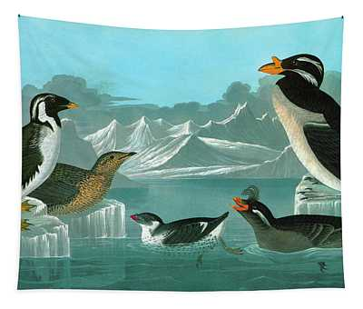 Auklets Paintings Wall Tapestries