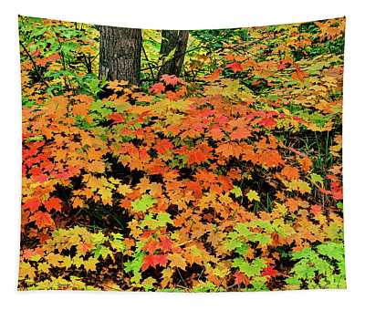 Autumn Trees In A Forest, Keweenaw Tapestry