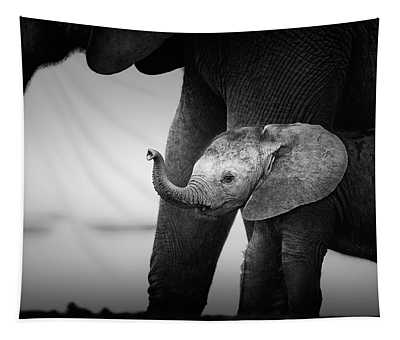 Baby Elephant Next To Cow  Tapestry