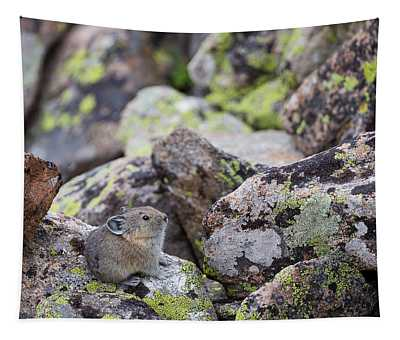 Baby Pika Tapestry