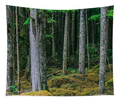 Inside View Backroad Forest Tapestry