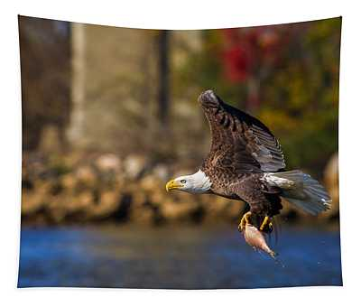 Bald Eagle In Flight Over Water Carrying A Fish Tapestry