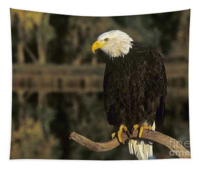 Bald Eagle On Dead Snag Wildlife Rescue Tapestry