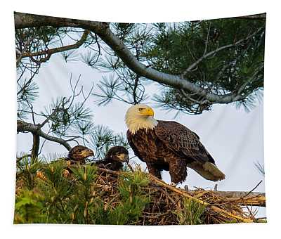Bald Eagle With Eaglets  Tapestry