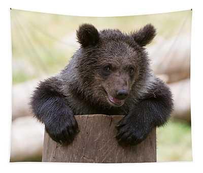 Bear Cub Tapestry