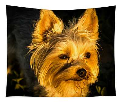 Bella The Wonder Dog Tapestry