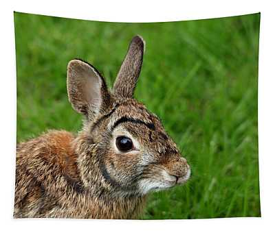 Big Eared Brown Eyed Cottontail Tapestry