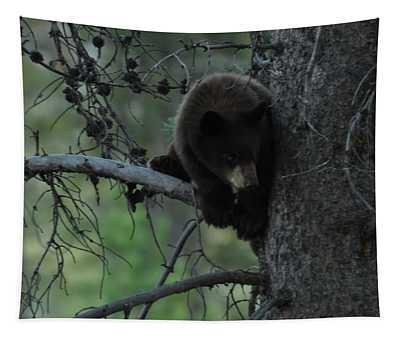 Black Bear Cub In Tree Tapestry