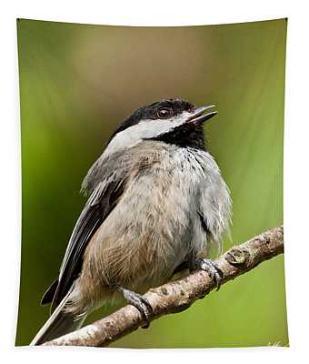 Black Capped Chickadee Singing Tapestry