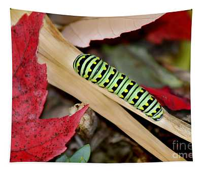 Black Swallowtail Butterfly Caterpillar Tapestry