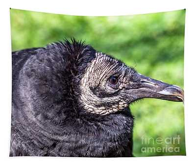 Black Vulture Waiting For Prey Tapestry