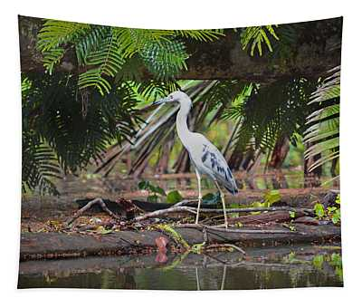 Tapestry featuring the photograph Blue Heron Tortuguero Costa Rica by Gary Keesler