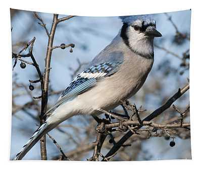 Blue Jay.. Tapestry