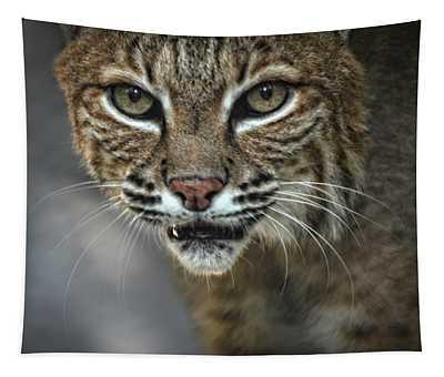 Bobcat Stare Tapestry