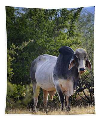 Brahma Cow Tapestry